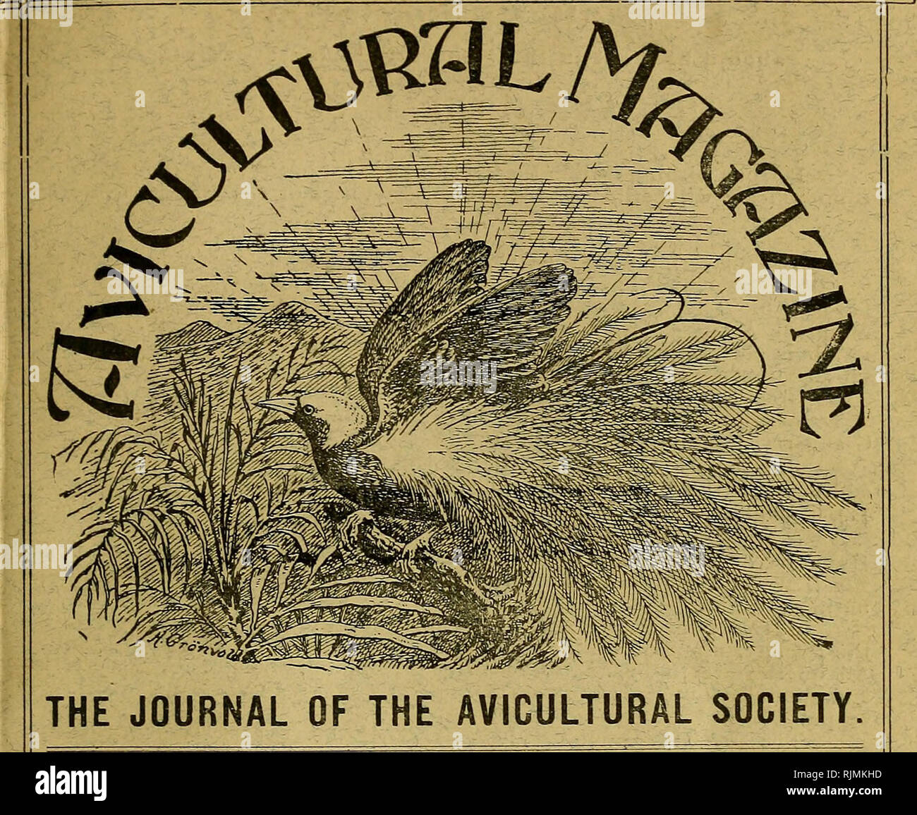 a33fcab2b Birds; Cage birds. NEW SERIES Vol. VI. No. 1. ? The price of this NOVEMBER,  1907 number is -j/. Members' Annual Subscription, 10 - | payable in advance.