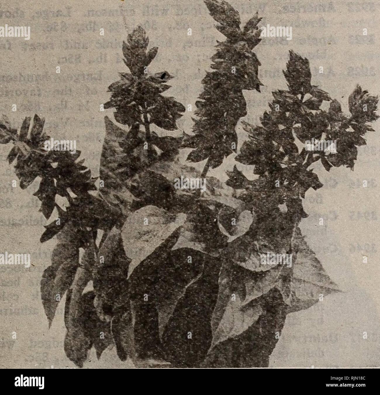Barnard's seeds, bulbs, shrubs 1918  Seeds Catalogs
