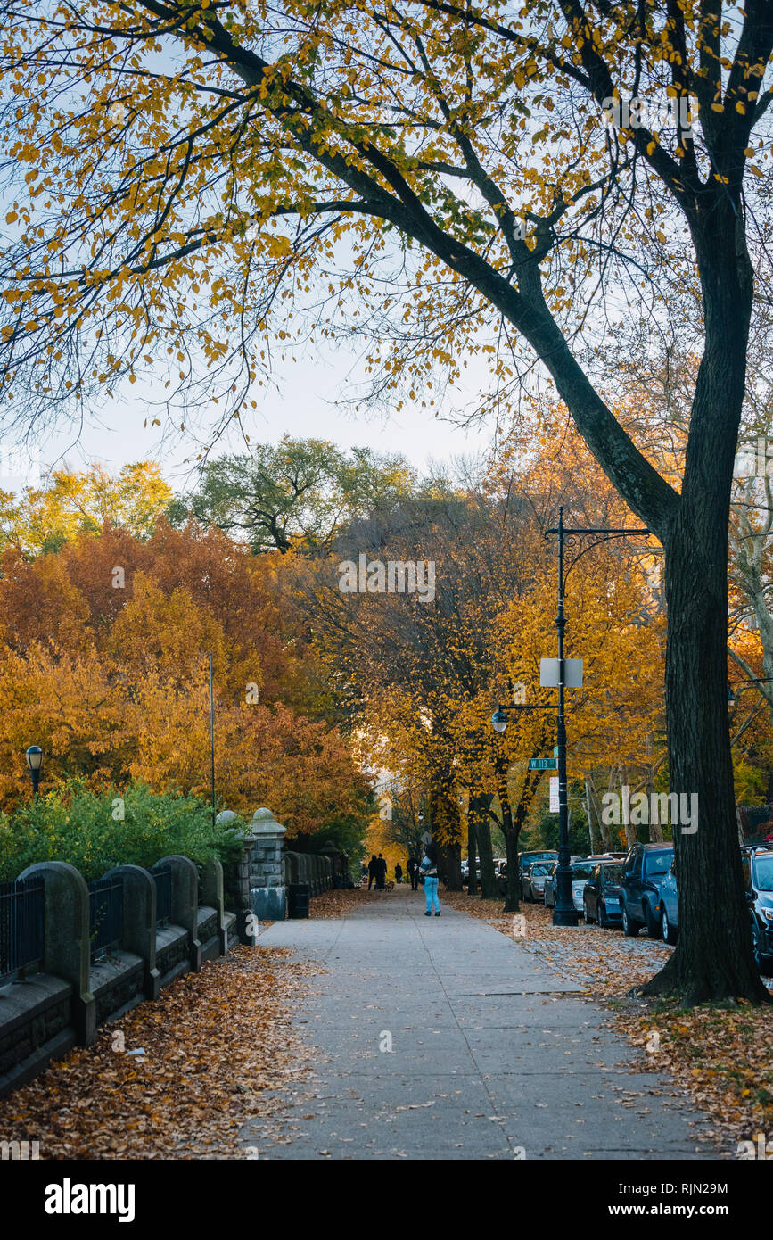 Autumn color at Morningside Heights, in Harlem, New York City - Stock Image