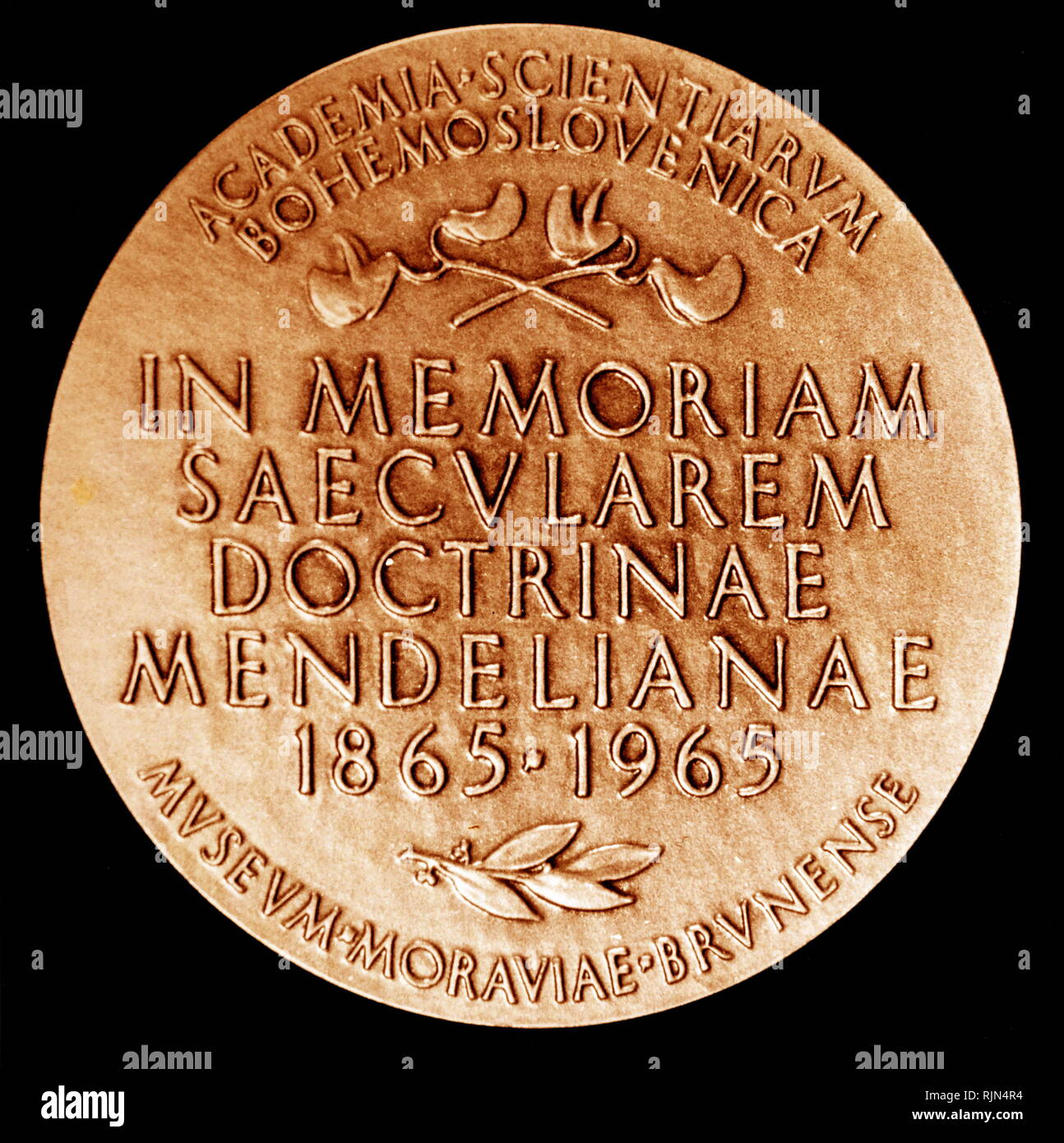 GREGOR JOHANN MENDEL (1822-1884) botanist; Reverse of a medal issued in 1965, to commemorate the centenary of the publication of the hybridization of peas - Stock Image