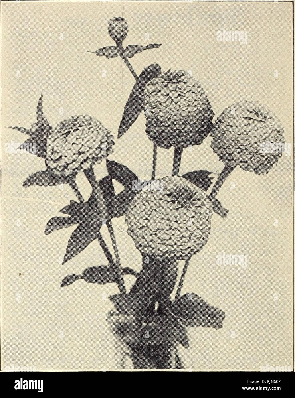 Barnard's garden novelties and specialties 1930  Seeds