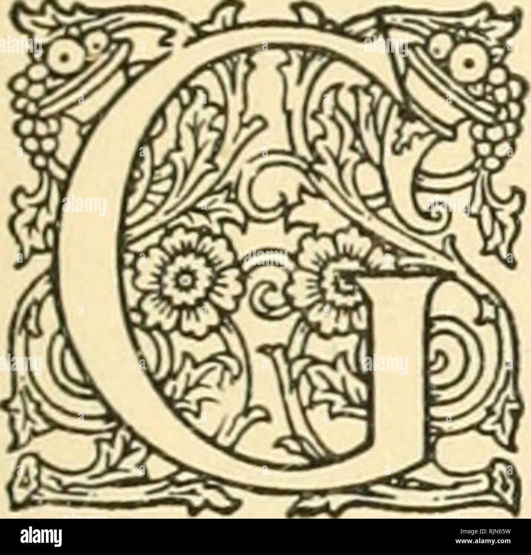 Bannertail