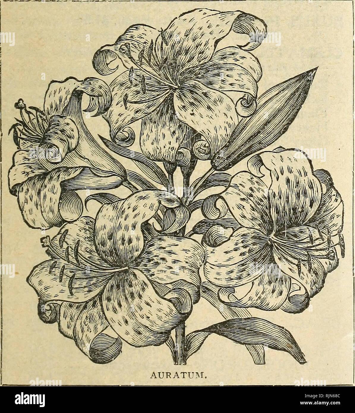 Barnard's florists' wholesale list of seeds bulbs sundries, etc
