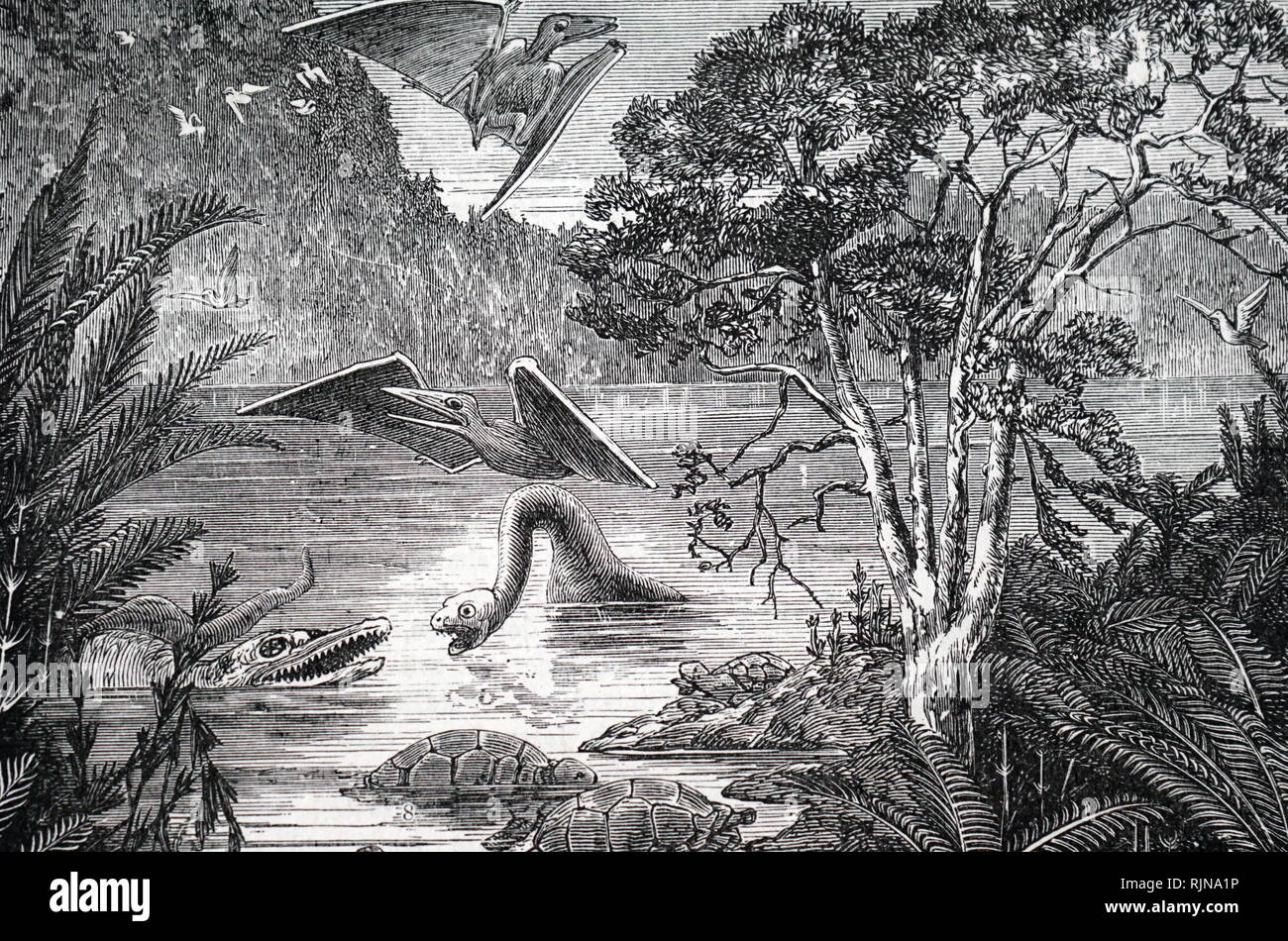 An engraving depicting the ideal flora and fauna of the Upper Cretaceous period. Dated 19th century - Stock Image