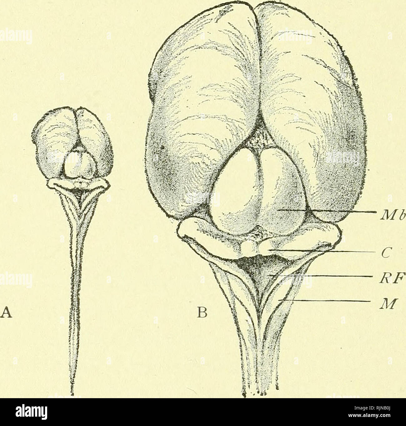 A text-book of embryology for students of medicine