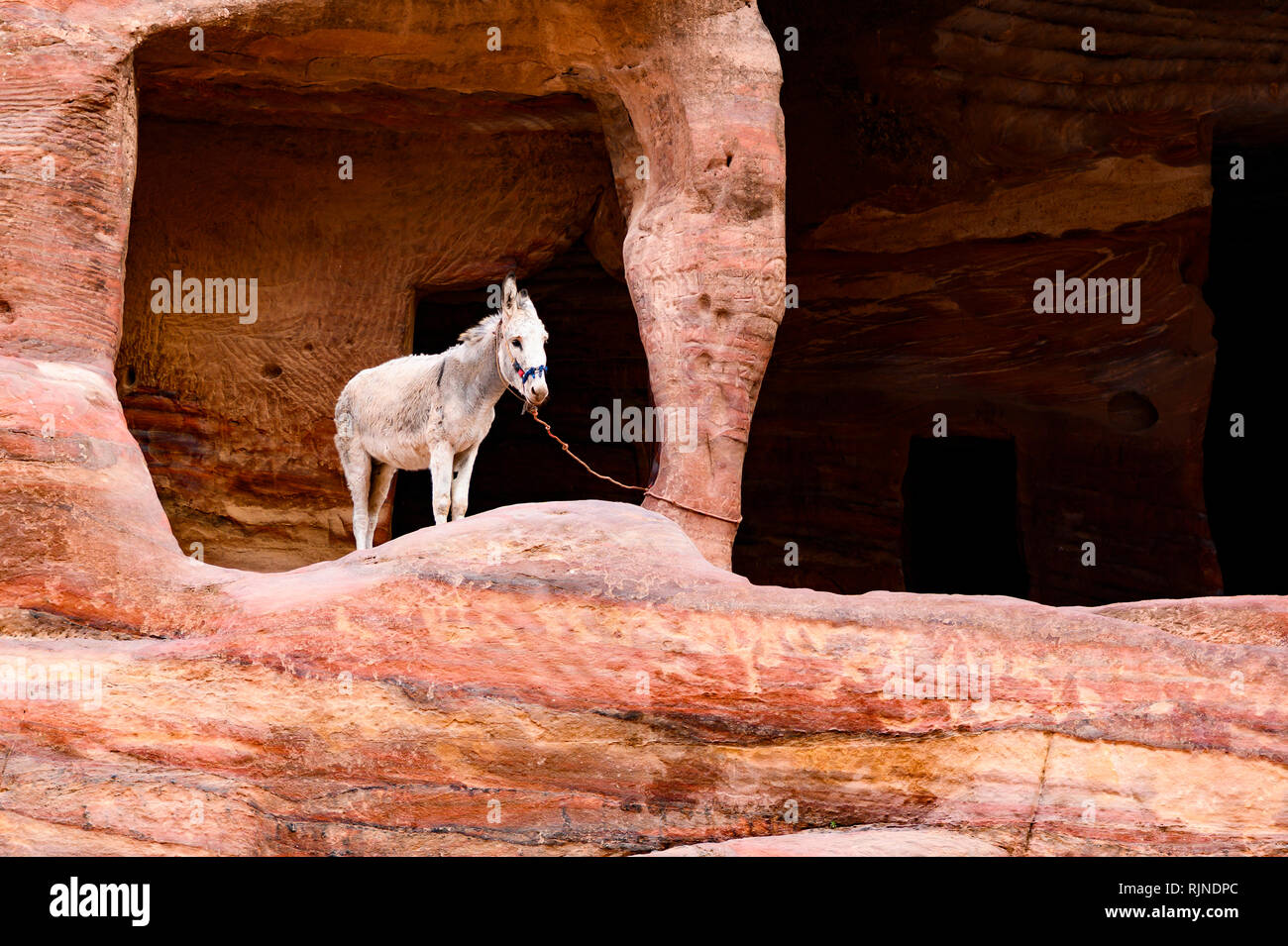 A donkeys inside caves dug into a rock formation in Petra. - Stock Image