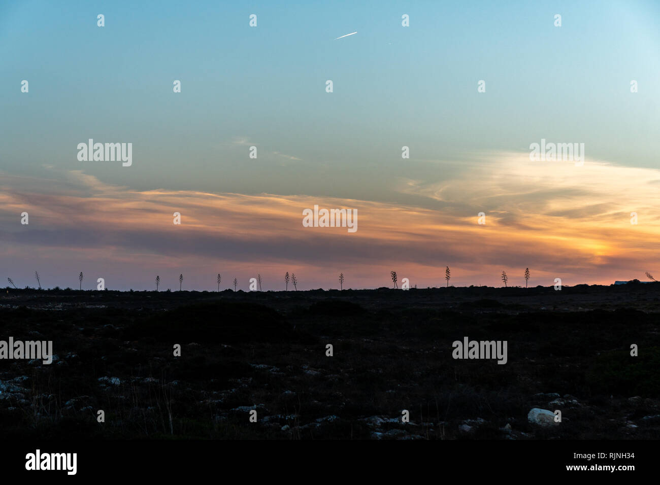 tree silhouete at sunset - Stock Image