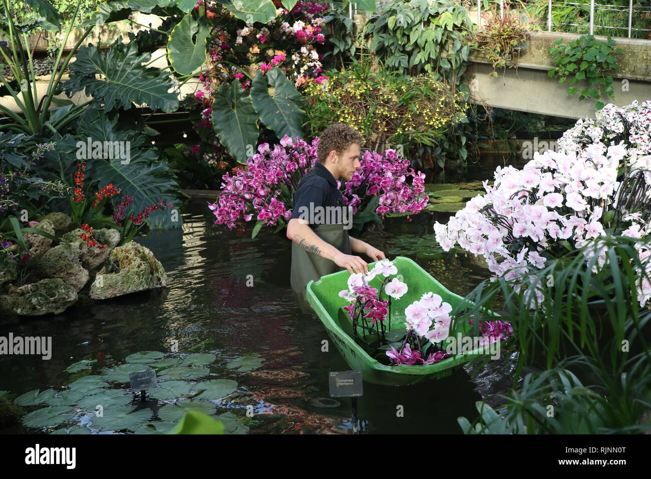 Kew Orchid Festival : Celebrate the Colour of Colombia 9 February to March 2019 - Stock Image