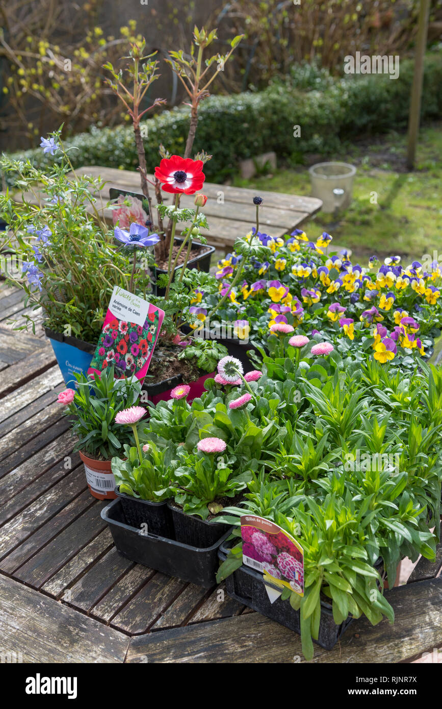Various plants in pots and buckets before planting, spring, Pas de Calais, France - Stock Image
