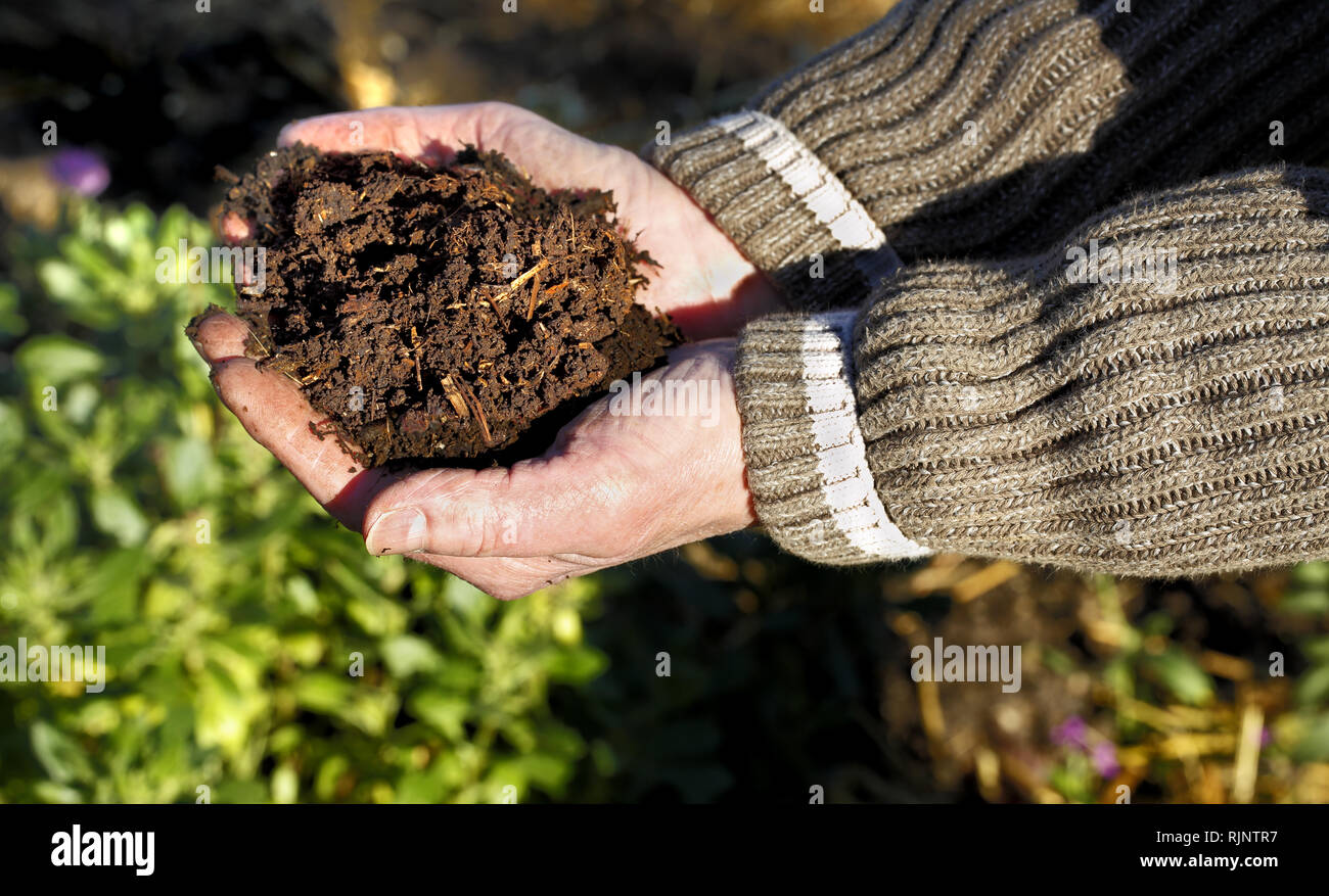 A mans hands holding fresh home mad compost - Stock Image