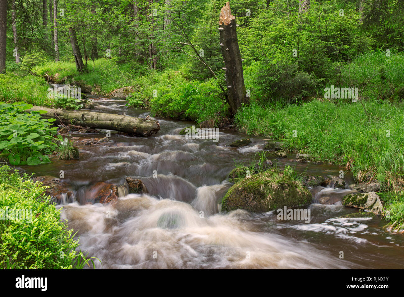 Warme Bode, right-hand headstream of the River Bode in the High Harz mountains, Lower Saxony / Niedersachsen, Germany - Stock Image