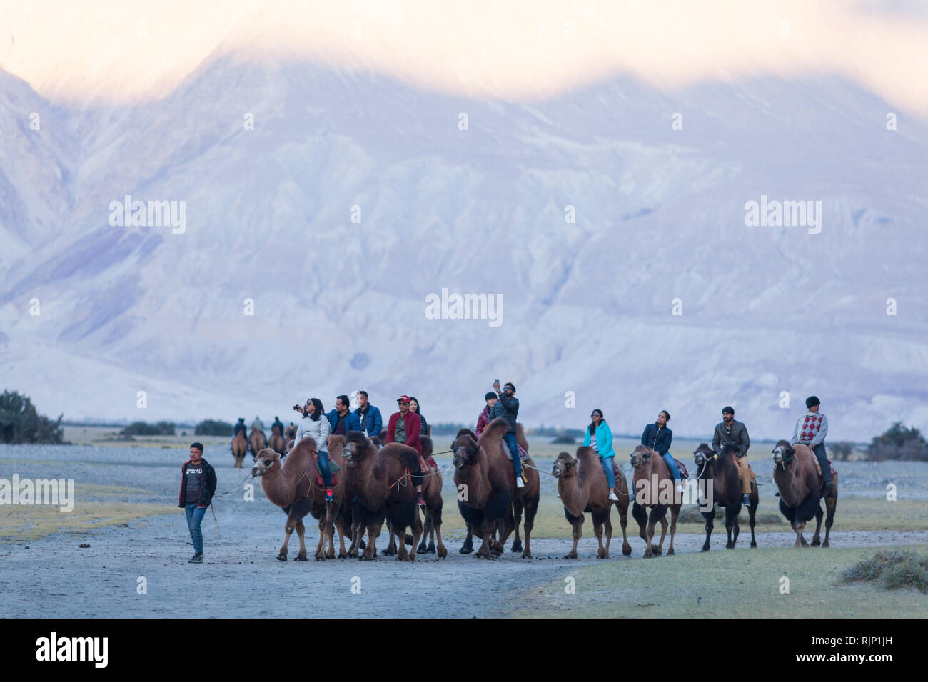 Tourists riding bactrian camels in the area of Hunder, Nubra Valley, Ladakh, Jammu and Kashmir, India Stock Photo