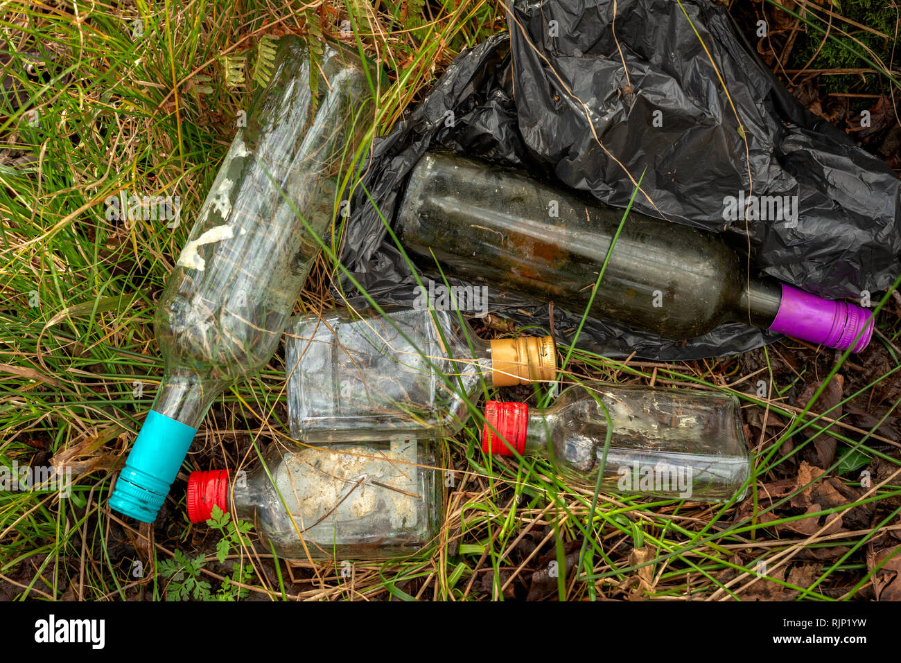 Litter littering problem. Garbage waste glass wine and spirits bottles dumped in forest. Bottle garbage pollution environmental problem. - Stock Image