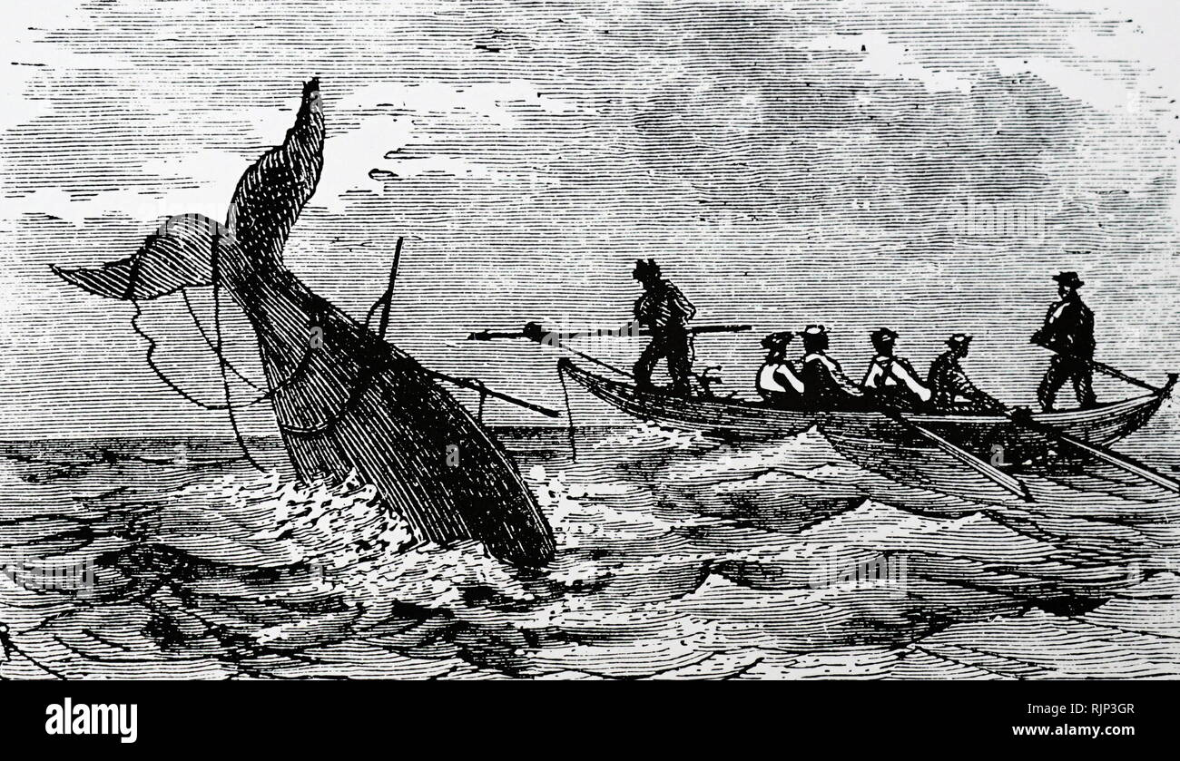 An engraving depicting whaling in the Arctic seas. Dated 19th century - Stock Image