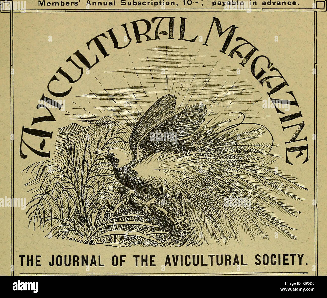 . The Avicultural magazine. Birds; Cage birds. NEW SERIES. MONTHLY. JULY, 1908. Vol. VI. No. 9 Price !*• 6**- 1^ Members' Annual Subscription, 10- ', payable in advance. [p|j. -^ CONTENTS.O^ Tlie Sarus Crane, [tvith plaff) by C. Harnby Smith ... The British Rail.s, by Percy W. Farmborough, F.Z.S The Weather and our Suiumer liirds, by P. K. M. Galloway Tlie Mountain Chat, by Dr. A. G. Bultkk ... The Nesting- of the Dwarf (Sronnd Dove, by w. E. Tkschkmakkr Notes on my Bird.s, by Rosii! Ai.nKK.soN No 1 ICES OF New Book-S, etc. : Briti.sh Birds Preliminary Report on an InvesLigation of the seasona - Stock Image