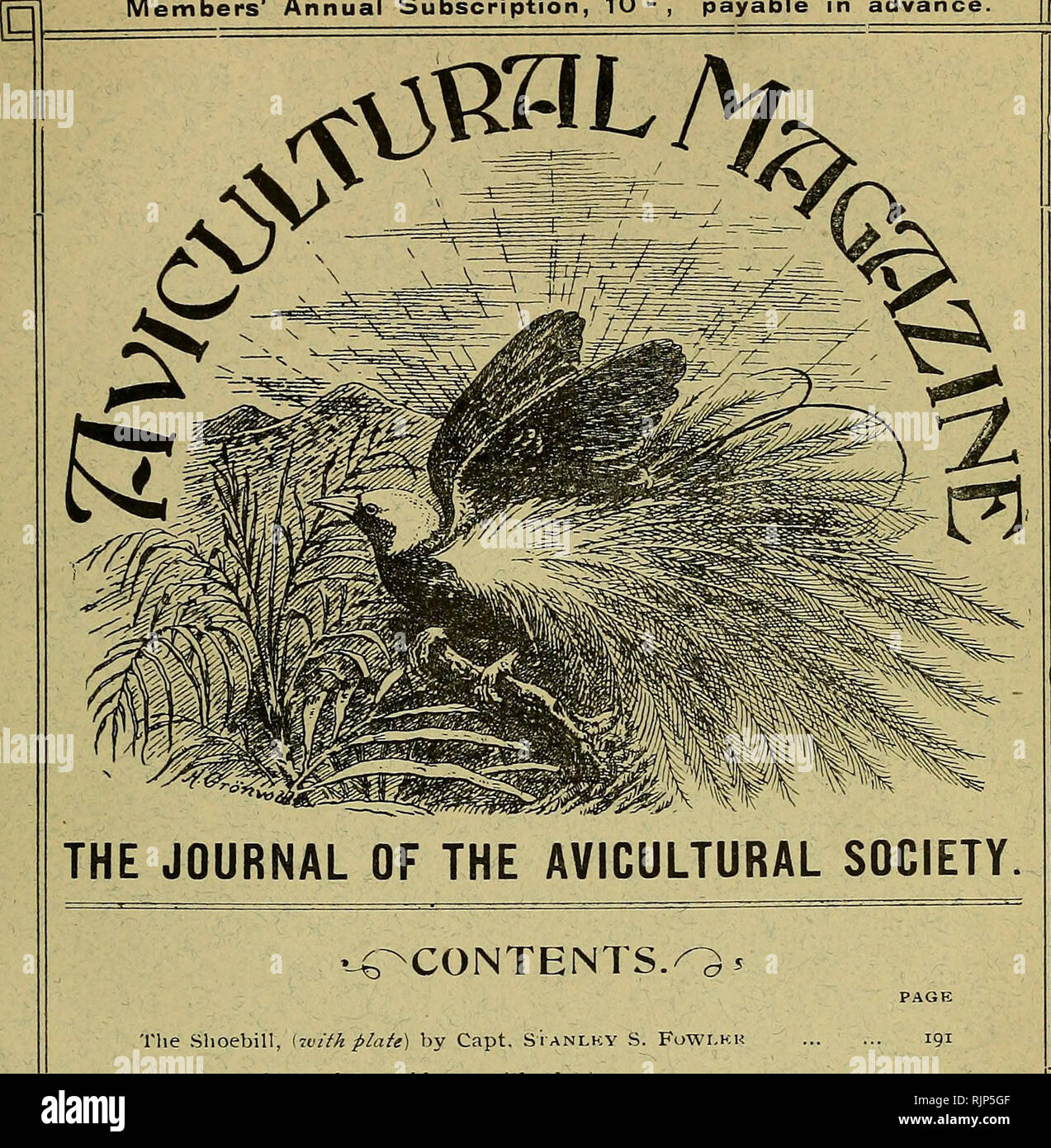 . The Avicultural magazine. Birds; Cage birds. NEW SERIES Vol. VI. No. 7 MONTHLY. MAY, 1908 Price i^- 6**- Members' Annual Subscription, 10 - ; payable in advance. [pjj The Slioebill, izvith flaie) by Capt. Stanlky S. FoWLkr Tlie Crested Wood Partridg-e, (â with plntf) by HUBKRT D. ASTI.ICY, K.Z.S., M.B.O.U. Successful Hird-keepiiig- in Cages, by K. Wakrkn Vkknon The Black-cheeked r.ovebird, by Kkginald Phillipps The Mind of a Bird, by Dr. A. G. Buti.kr Notices of Nkw Books, etc. : The Briti.sh Warblers British Birds The Society's Medal ... COUUESPONDKNCK ; Inheritance from Previous Marriag-e, - Stock Image