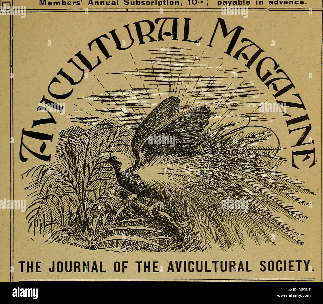 . The Avicultural magazine. Birds; Cage birds. NEW SERIES. Vol. Vi. No. 5. MONTHLY. Price i^- 6«*- MARCH, 1908, Members' Annual Subscription, 10/-| payable in advance. P. .-OCONTENTS.Oj PAGE The Egyptian Plover (ivifk plate), by Captain Stanlky S. Flower .. 139 Notes oil My Birds {continued), by Kosie Aldbrson 144 The Tropical Seed-Finch i49 Red-breasted Starlings, etc., by Dr. A. G. Buti.er ... 151 Notices of New Books, etc. : British Birds i55 January Meeting- of the Council 156 Correspondence: Wood-pigeon Diphtheria, 157; The Recent Crystal Show, 158; The Hedgs-Accentor, 158; Breeding Briti - Stock Image
