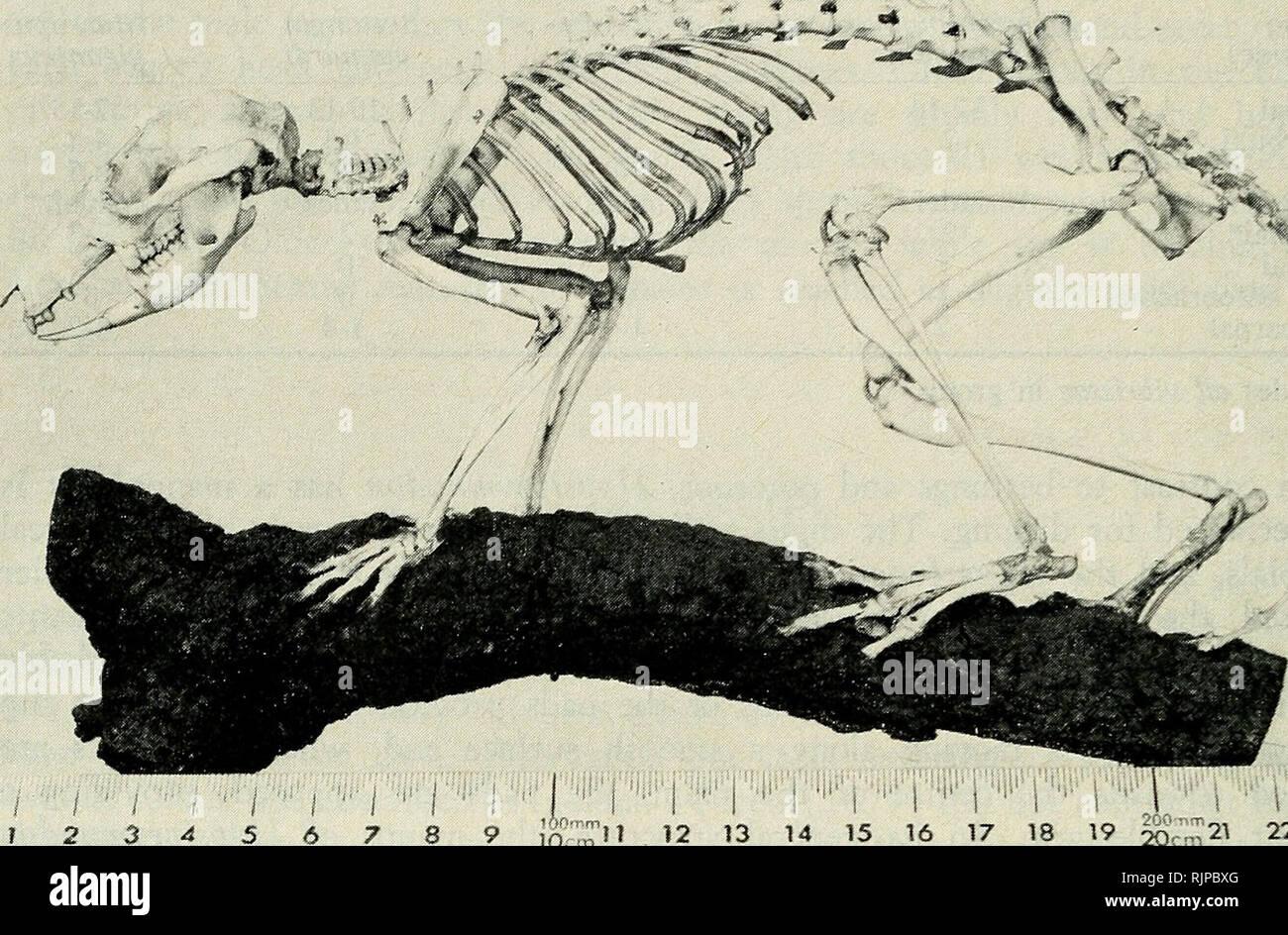 The Australian zoologist  Zoology