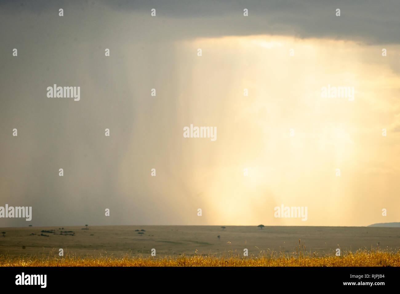 Rainstorm in the masai mara in kenya - Stock Image