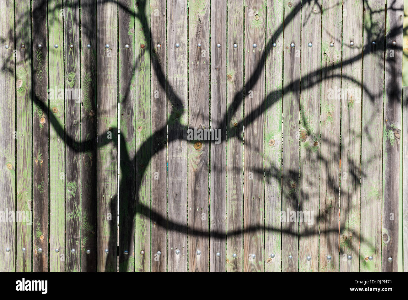 The shadow of the branches of a tree projected on an old green wooden fence - Stock Image