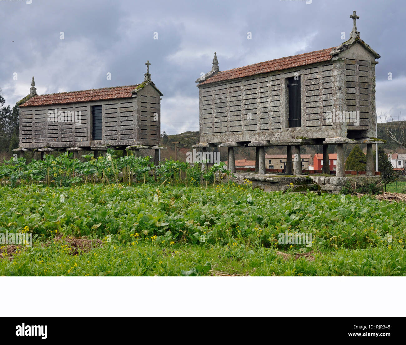 Traditional rectangular stone granaries or 'hórreos', used for centuries in Galicia, Spain to store grain, keeping it dry and safe from rodents. - Stock Image