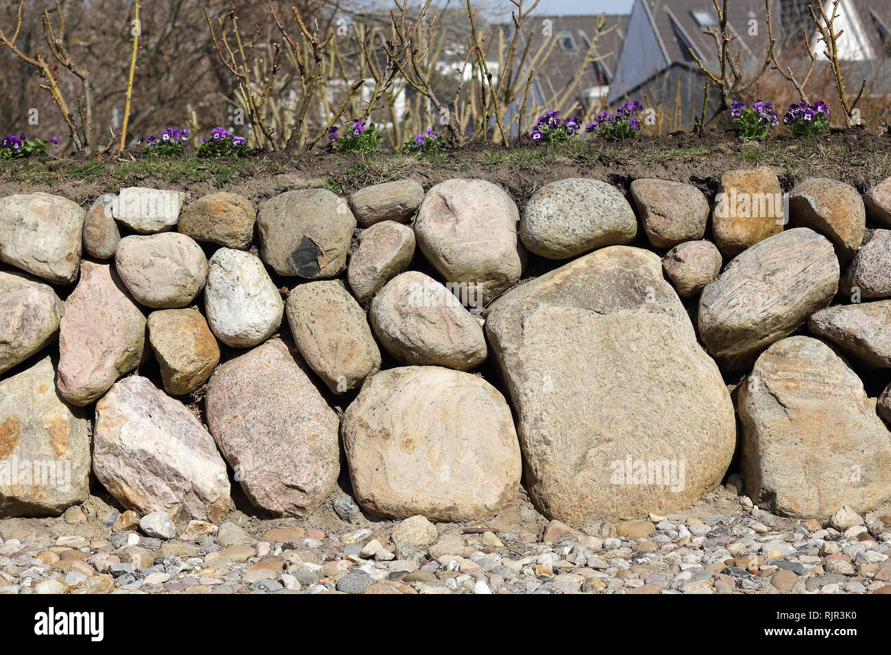 Frisian stone wall with pansies - Stock Image