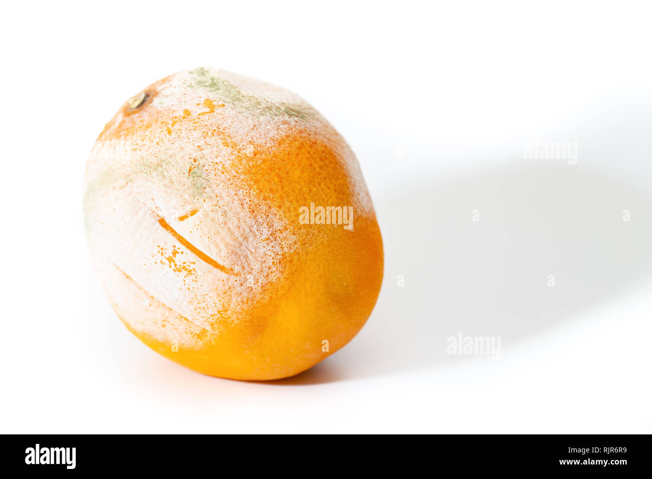 Spoiled orange with mold, on white background - Stock Image