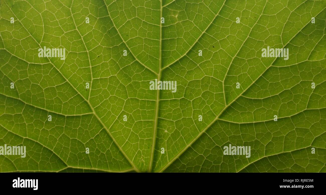 green abstract photo in sunlight - Stock Image