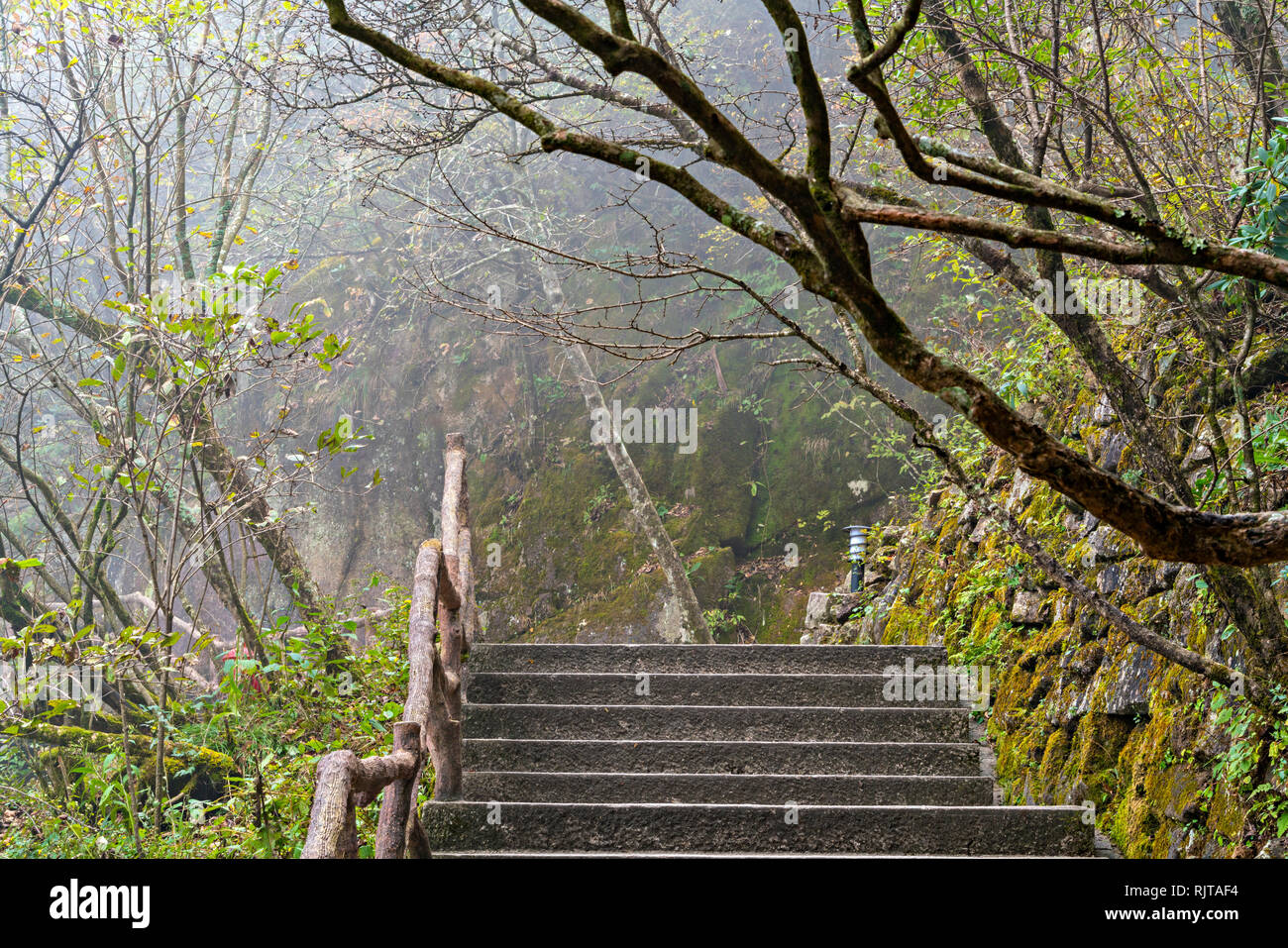 Stairway In The Forest - Stock Image