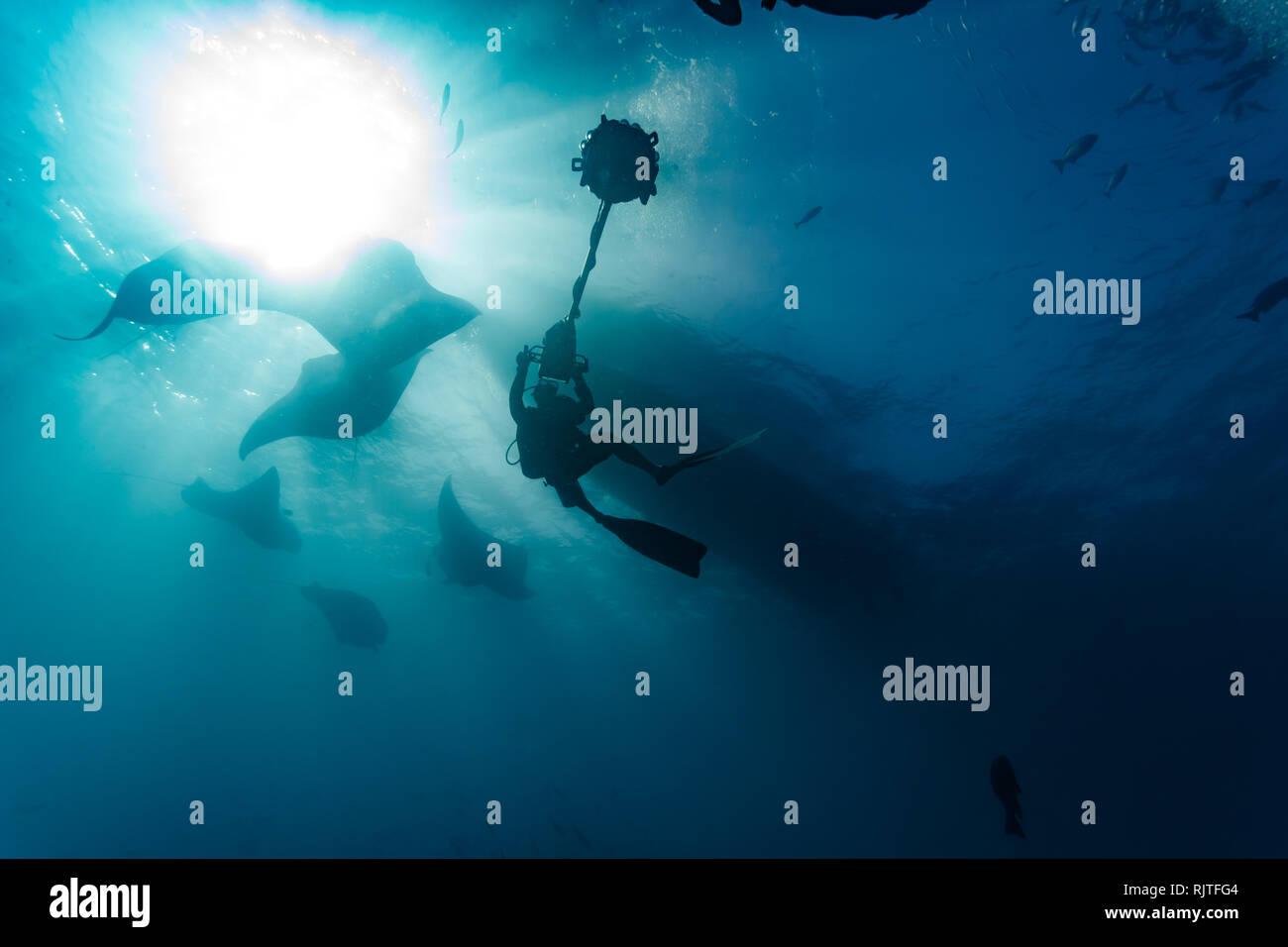 Film crew scuba divers photograph several  giant manta rays Stock Photo