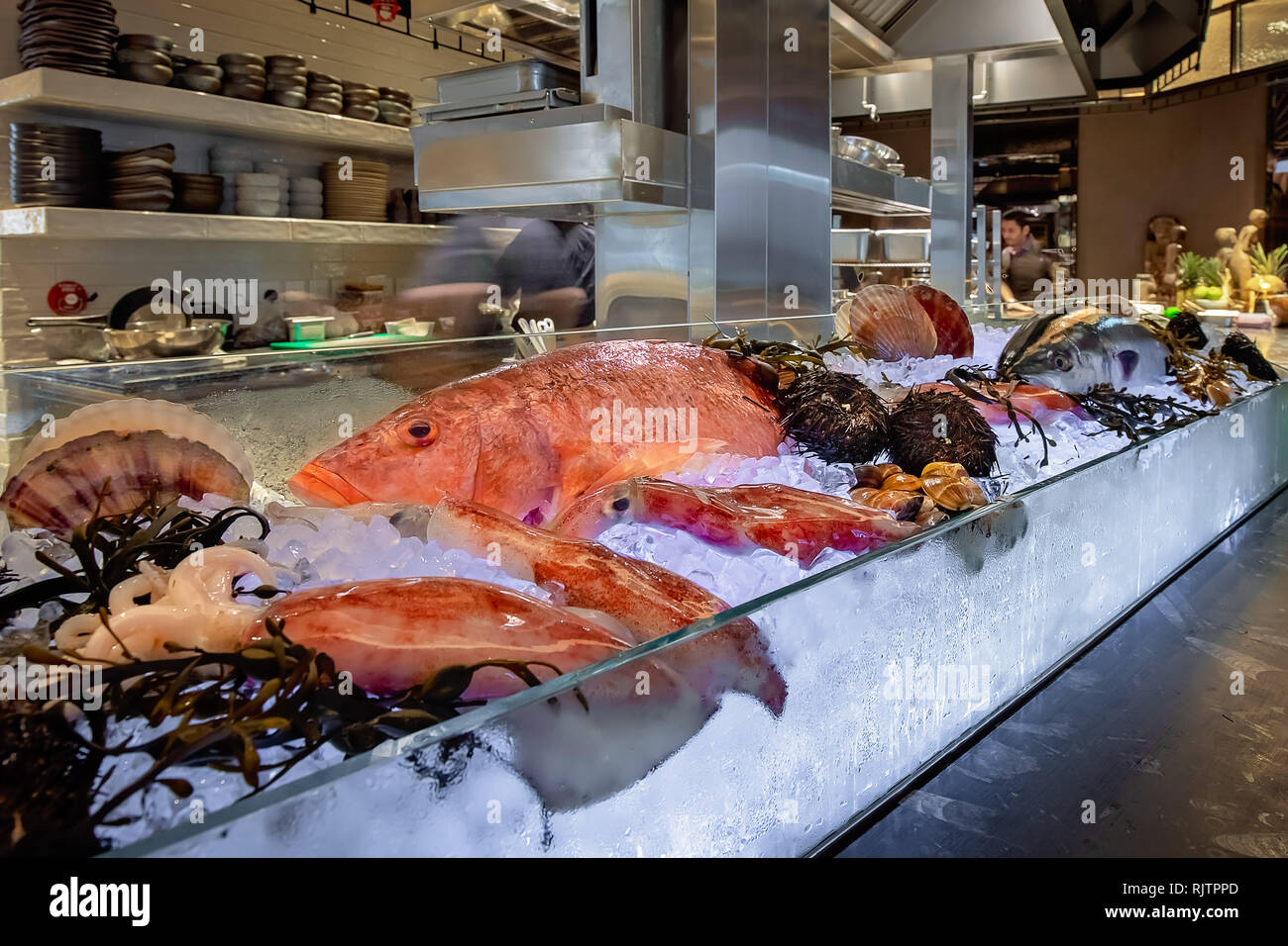 Fresh fish and seafood selection over crushed ice - Stock Image