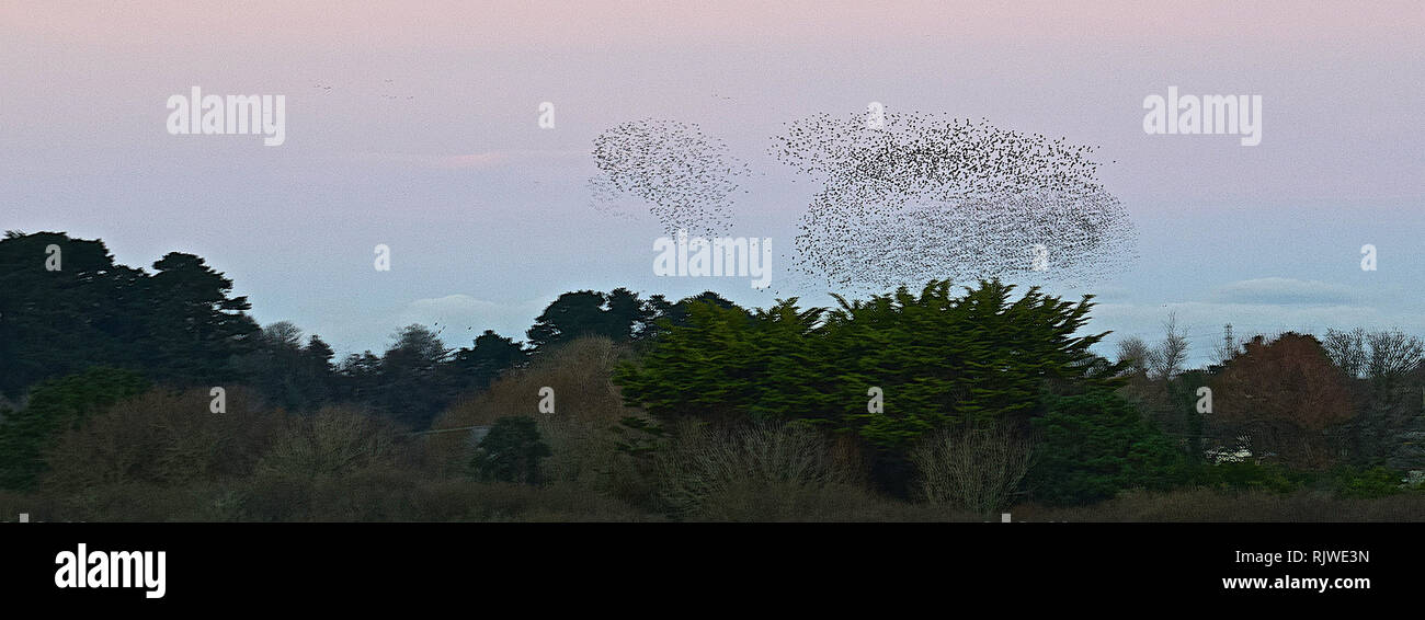 St. Ives & Starling murmuration, Cornwall, 030117 - Stock Image