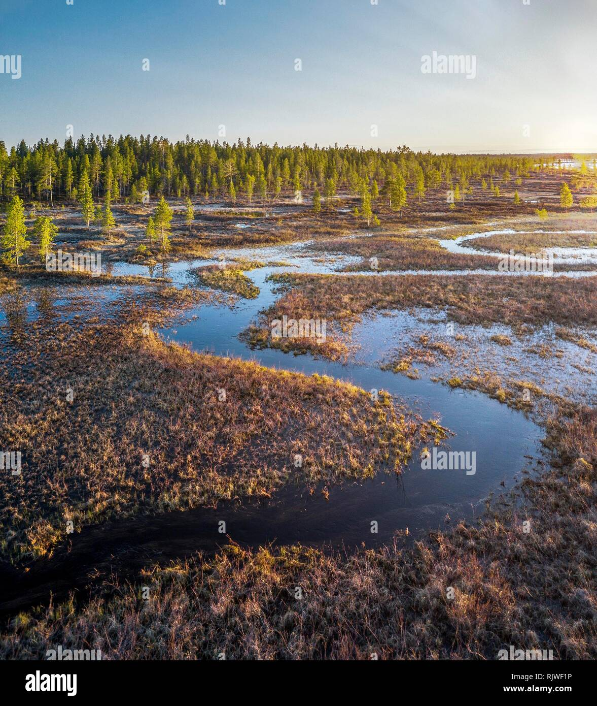 Drone shot, wetland with meander and Pines (Pinus), Lake Inari, Inari, Lapland, Finland - Stock Image