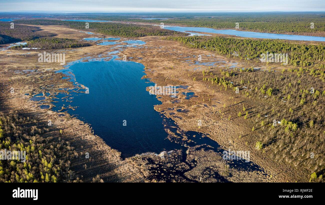 Drone shot, Inarisee surrounded by forest with Spruces (Picea) and Pines (Pinus) in spring, Lake Inari, Inari, Lapland, Finland - Stock Image