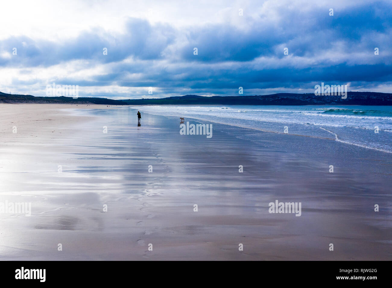 Shiny dog walk Stock Photo