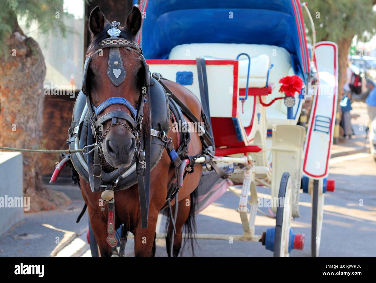 A horse and carriage waiting for tourists on Aegina island, Greece - Stock Image