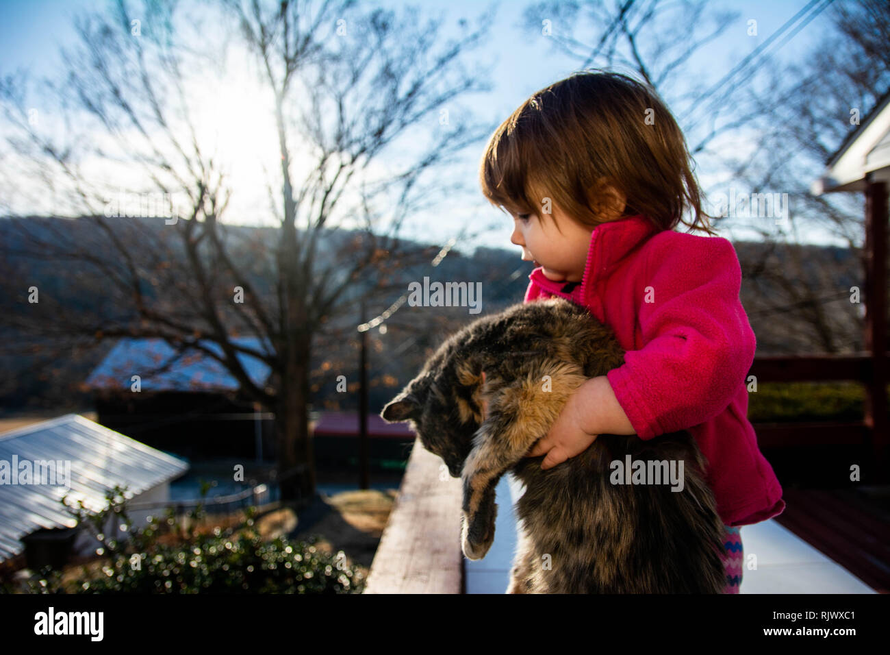 Toddler girl holds a cat on a sunny day in Pennsylvania, USA - Stock Image
