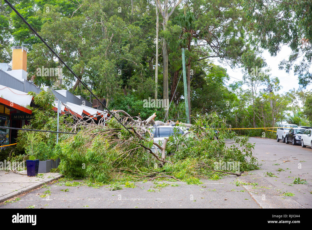 Cars crushed by fallen tree on Sydney Pittwater area, Sydney,Australia Stock Photo