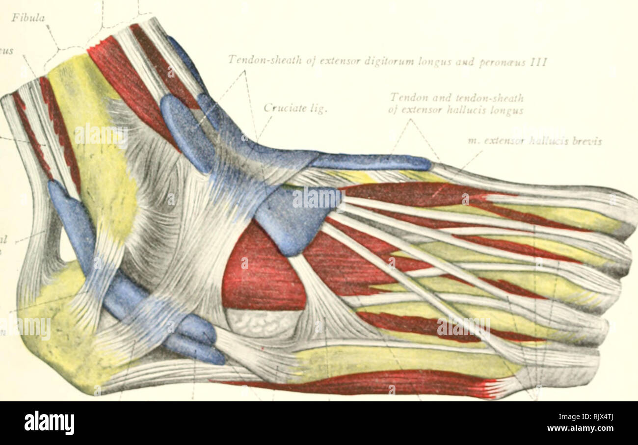 Atlas And Text Book Of Human Anatomy Anatomy Atlases The