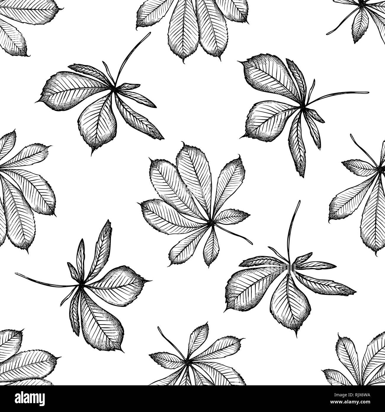 Seamless pattern with black and white buckeye - Stock Image