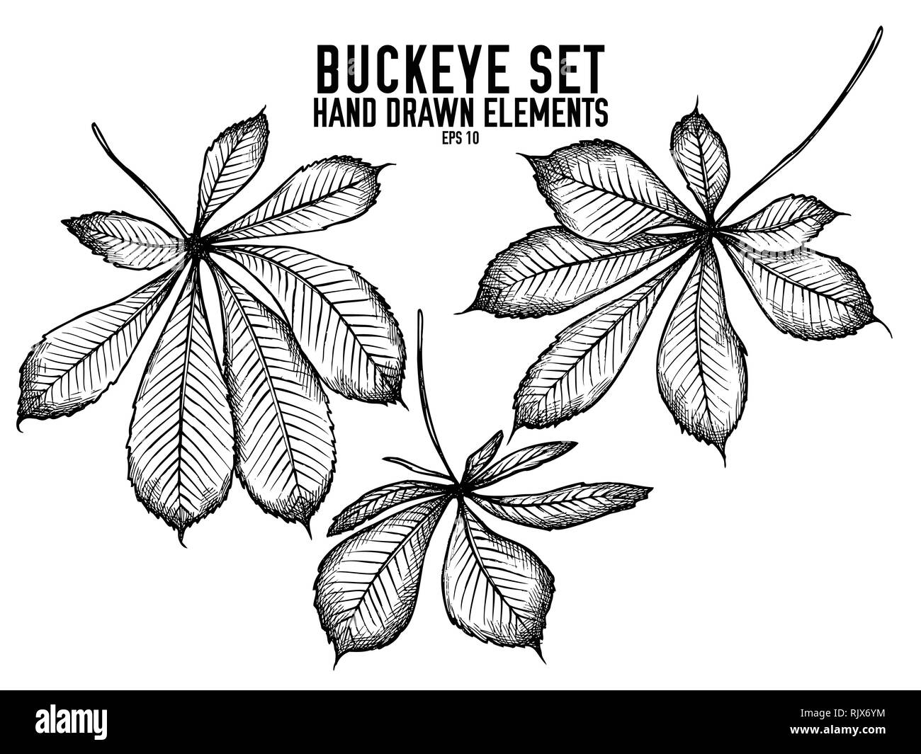 Vector collection of hand drawn black and white buckeye - Stock Image
