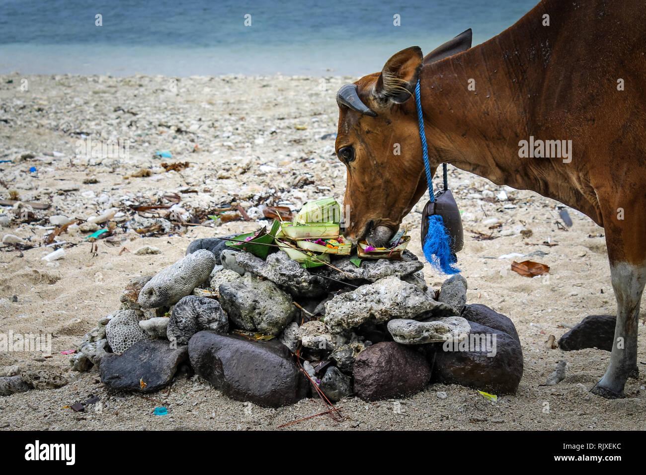 Carte Bali Serangan.Canang Sari Stock Photos Canang Sari Stock Images Alamy