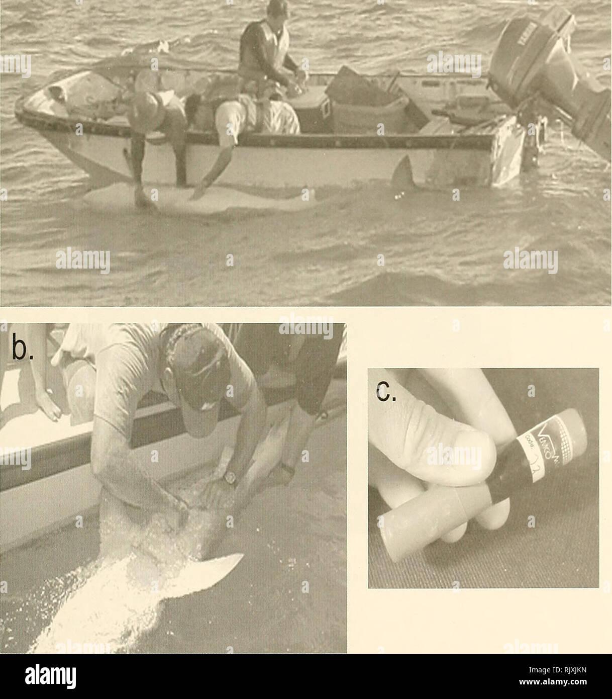 Boston Whaler Stock Photos & Boston Whaler Stock Images - Alamy