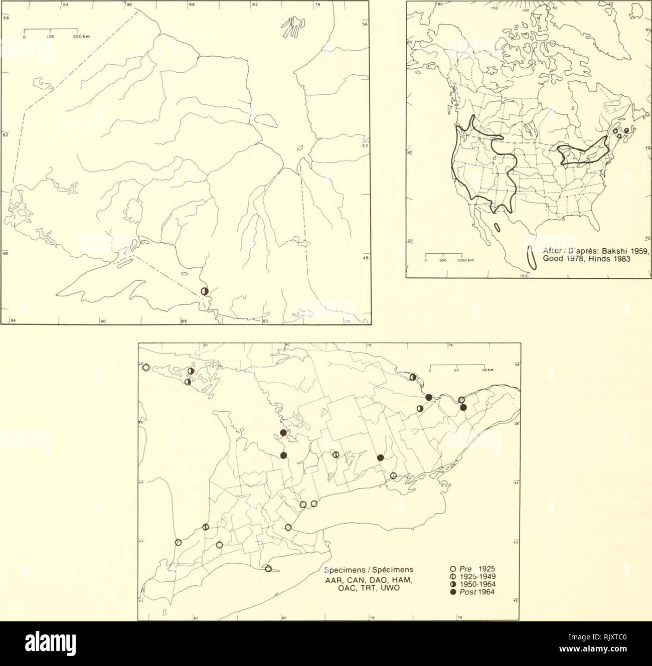 . Atlas of the rare vascular plants of Ontario. Rare plants; Botany. Atlas of the Rare Vascular Plants of Ontario / Atlas des plantes vasculaires rares de l'Ontario ERICACEAE Pterospora andromedea Nutt. Pine-drops Ptérospore andromède. Specimens / Spécimens AAR, CAN, DAO, HAM, GAG, TRT, UWO O Pre 1925 © 1925-1949 9 1950-1964 • Posf1964 HABITAT: Mixed and deciduous woods. STATUS: Rare in Alberta, New Brunswicl<, Quebec, and Saskatchewan. Possibly extirpated in New Hampshire and New York; endangered in Texas and Wisconsin; rare in Nevada and Vernnont. HABITAT: Forêts de peuplement mélangé et  Stock Photo