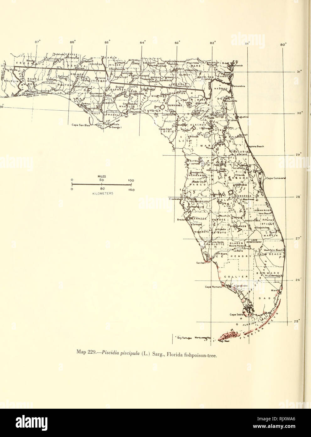 Atlas of United States trees: volume 5. Florida. Trees. Map ... on map of florida national forests, map of florida townships, map of florida wildlife management areas, map of florida fishing, map of florida marinas, map of florida oil, map of florida travel, map of hunting, map of florida panther habitat, map of florida dairy, map of florida watersheds, map of florida fisheries, map of florida sea level rise, map of florida river, map of florida artificial reefs, map of florida canada, map of florida correctional facility, map of florida inland waterways, map of florida population demographics, map of university of south florida,