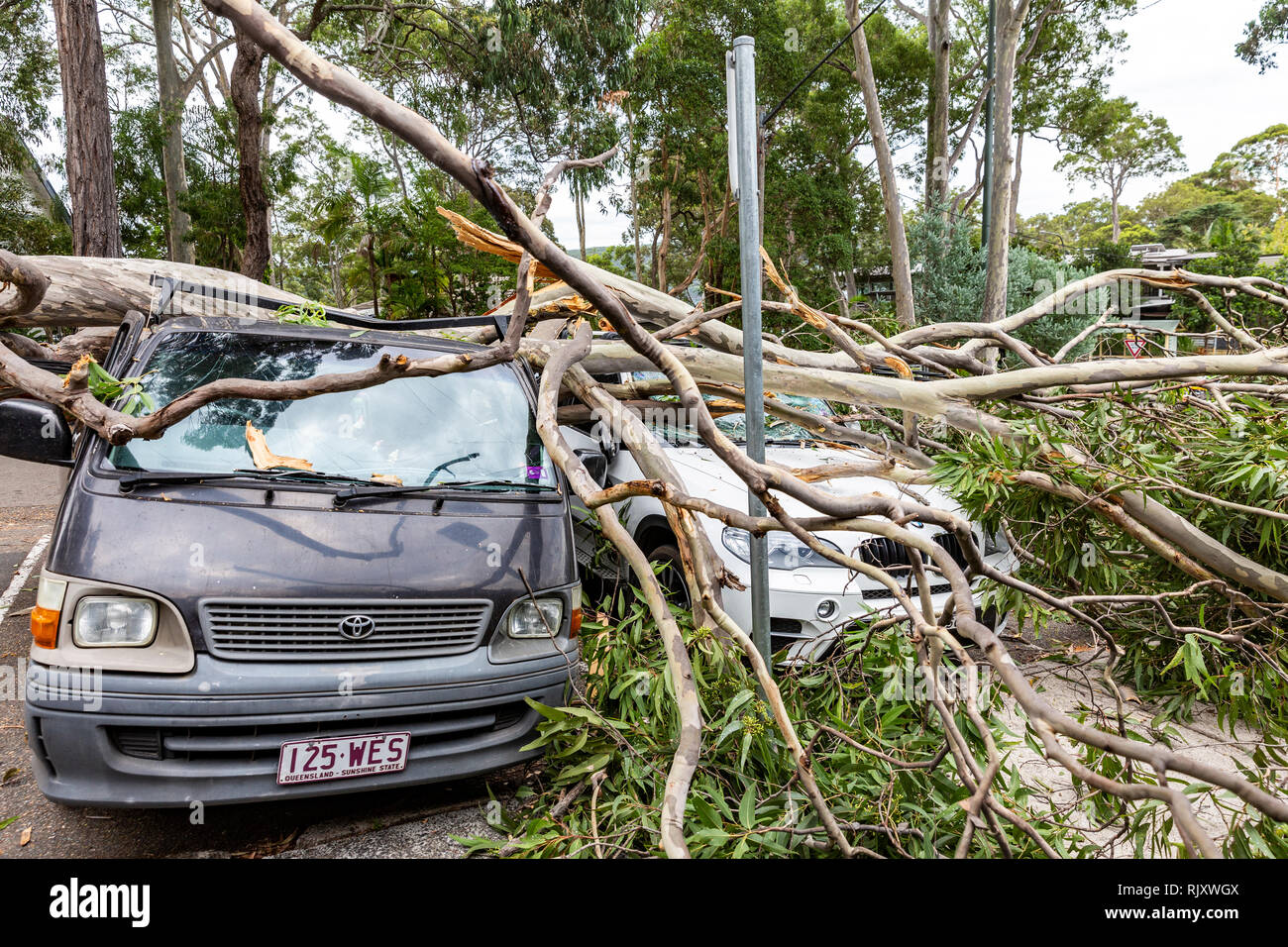 Tree falls and hits parked car on the roof,Sydney,Australia - Stock Image