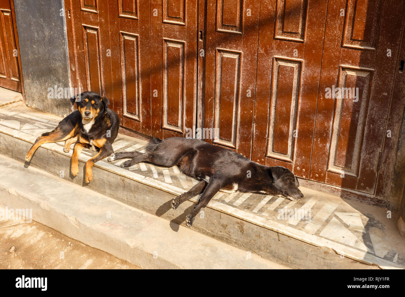two black dogs lying on the porch at the door of the house, Kathmandu, Nepal - Stock Image