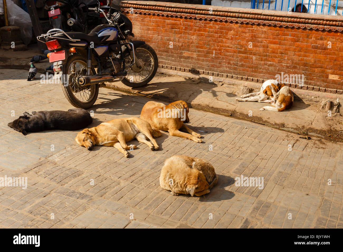 dogs lie and bask in the sun outside, Kathmandu, Nepal - Stock Image