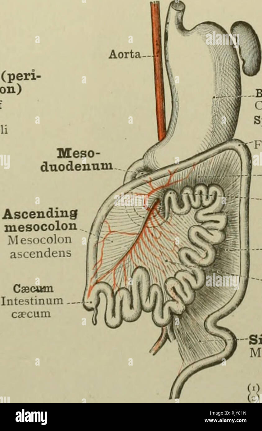 An Atlas Of Human Anatomy For Students And Physicians Anatomy