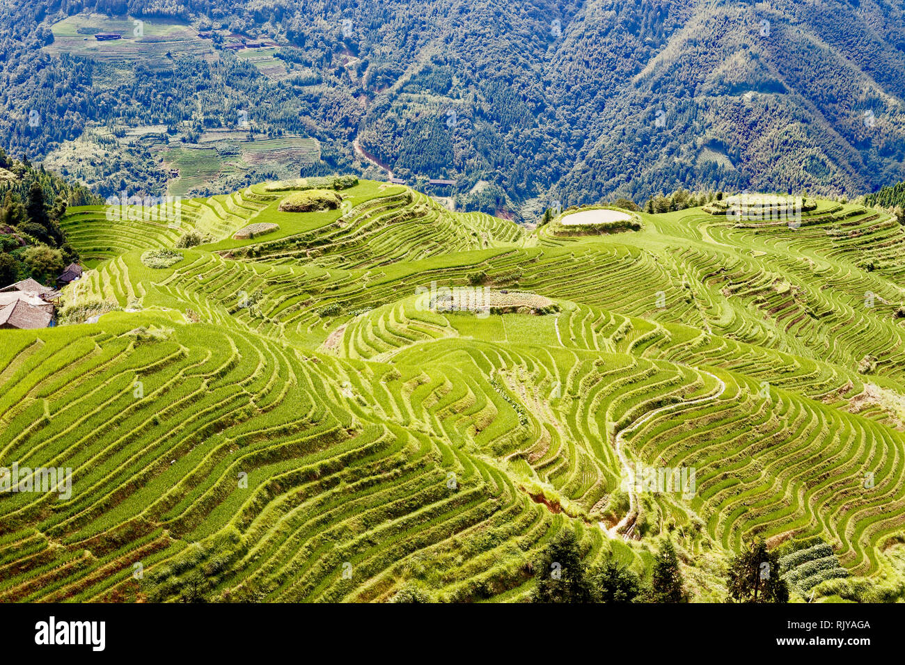 Guilin Region Rice Terraces, China - Stock Image